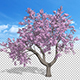 Blossoming Cherry Tree - VideoHive Item for Sale