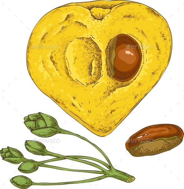 Ripe Yellow Canistel or Eggfruit in Cross Section - Food Objects