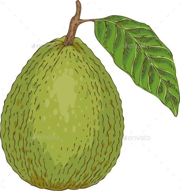 Ripe Guava with Leaf - Food Objects