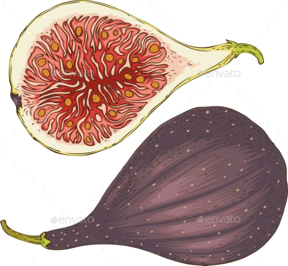 Two Ripe Figs Whole and in Cross Section - Food Objects