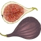 Two Ripe Figs Whole and in Cross Section - GraphicRiver Item for Sale