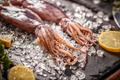 Fresh raw squid