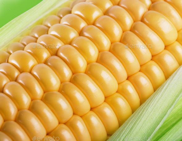 Fragment of a cob of ripe yellow corn in leaves - Stock Photo - Images