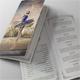 Ballet Program Bi-Fold Brochure