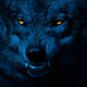 Wolf Growls With Glowing Eyes At Night - VideoHive Item for Sale