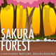 2D Sakura Forest - Cartoony Parallax Nature Background - GraphicRiver Item for Sale