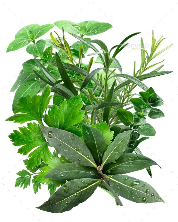 Mediterranean Herbs - Stock Photo - Images