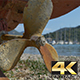 Rusty Propeller near Shore - VideoHive Item for Sale