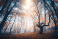 Amazing scene with autumn trees in fog. Autumn forest - PhotoDune Item for Sale