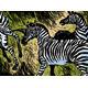 Zebras - GraphicRiver Item for Sale