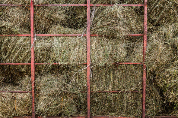 Dry Hay Stacks into a Transportation Truck - Stock Photo - Images