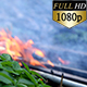 Fire in the Woods 0334 - VideoHive Item for Sale