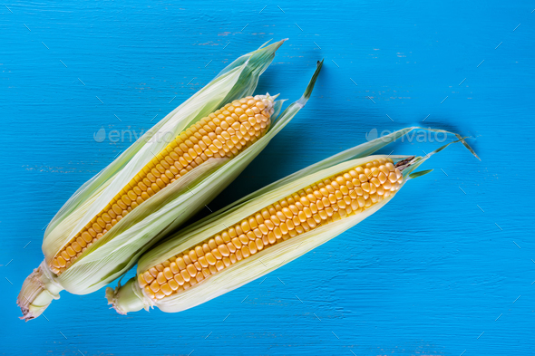 Ripe yellow corn on a blue table - Stock Photo - Images