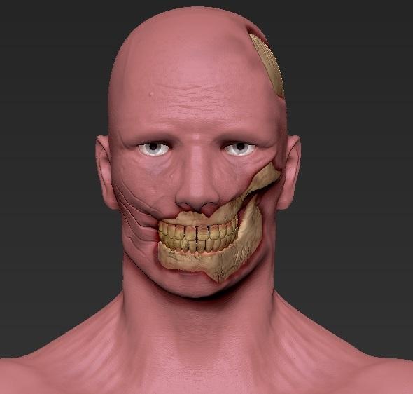 3DOcean Skull 20557277