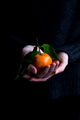 Female Holding Clementine in Hands - PhotoDune Item for Sale