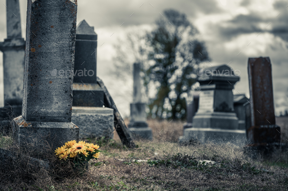Sunflowers Bouquet in a Sad Cemetery - Stock Photo - Images