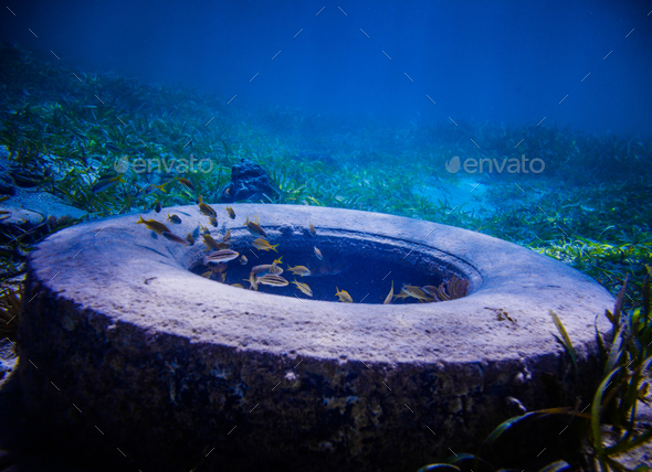 Tire Found Underwater - Stock Photo - Images