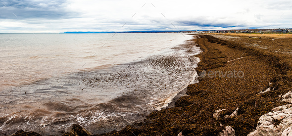 Seaweed Panorama of the Gaspe Peninsula - Stock Photo - Images