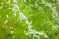 Falling Water Splash over Green Abstract Background with Room fo