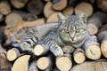 Cat resting on a heap of logs