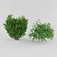 Vray Ready Plants Bush