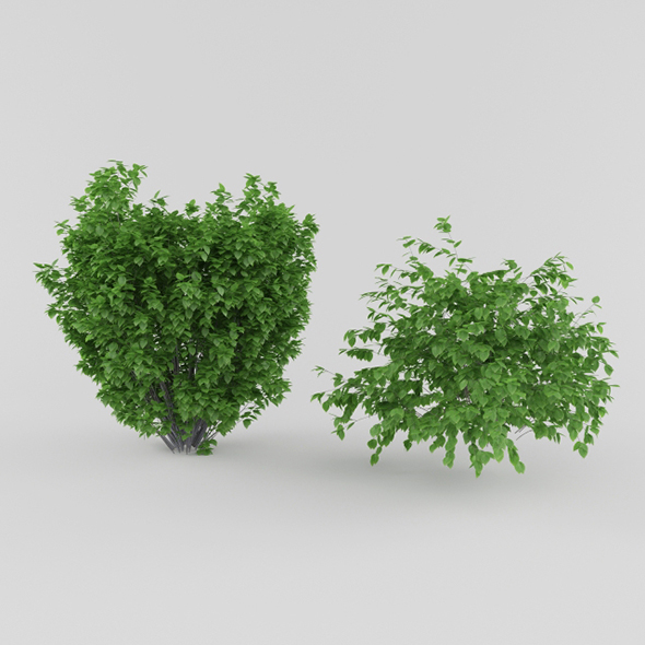 3DOcean Vray Ready Plants Bush 20561103