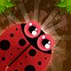Bugs Adventure IOS XCODE Admob + Multiple Characters