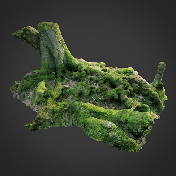 3DOcean 3D scanned nature forest roots 005 20564257
