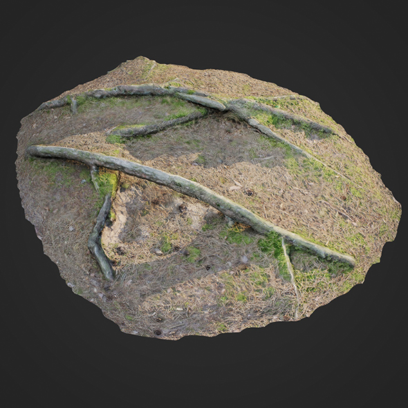 3d scanned nature forest roots 006 - 3DOcean Item for Sale