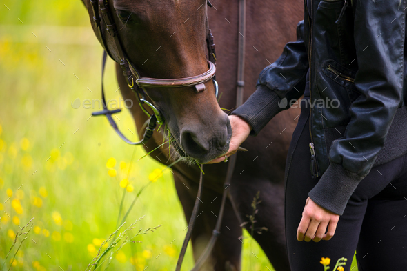 Close-up of woman feeding her arabian horse with snacks in the field - Stock Photo - Images