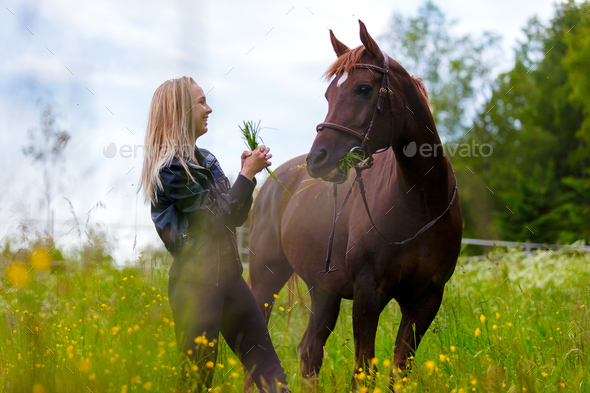 Happy young woman feeding her arabian horse with snacks in the field - Stock Photo - Images