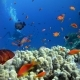 Colorful Fish on Vibrant Coral Reef and Diver. Red Sea. Egypt