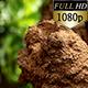 Termite Hive  0134 - VideoHive Item for Sale