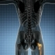 Hip Bones Anatomy