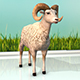 Sheep - 3DOcean Item for Sale