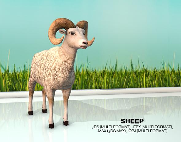 3DOcean Sheep 20570485