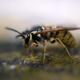 Wasp macro - PhotoDune Item for Sale