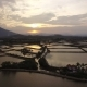 Aerial Survey Rice Fields at Sunset in Asia - VideoHive Item for Sale