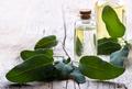 Sage essential oil - PhotoDune Item for Sale