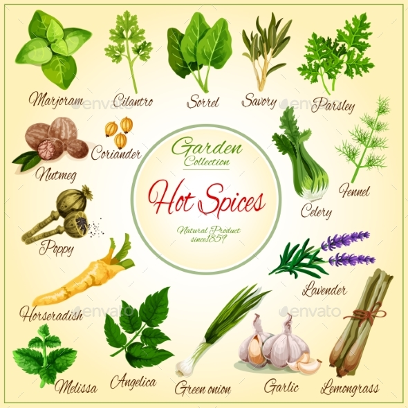 Vector Poster of Spice Seasonings Herb Flavorings - Food Objects