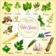 Vector Poster of Spice Seasonings Herb Flavorings