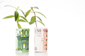 Concept of green plant grow on British Pound against EURO curren
