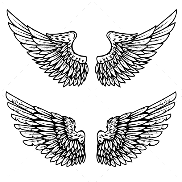 GraphicRiver Set of the Eagle Wings Isolated on White 20574502