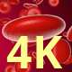 Blood Cells 4K - VideoHive Item for Sale