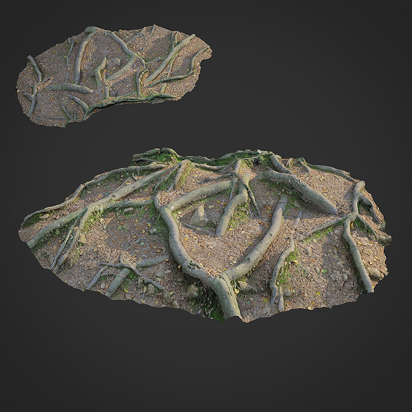3d scanned nature forest roots 010 - 3DOcean Item for Sale