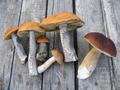 eatable mushrooms - PhotoDune Item for Sale