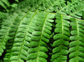 green fern leafs background - PhotoDune Item for Sale