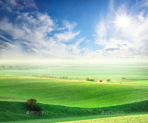 Wavy field with a green grass - Stock Photo - Images