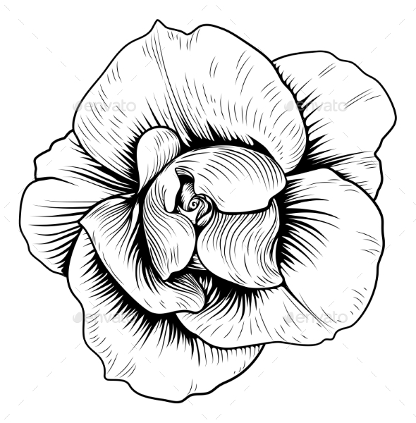 GraphicRiver Rose Flower Engraved Vintage Woodcut Etching 20578772