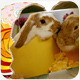HAPPY EASTER 2014 - VideoHive Item for Sale